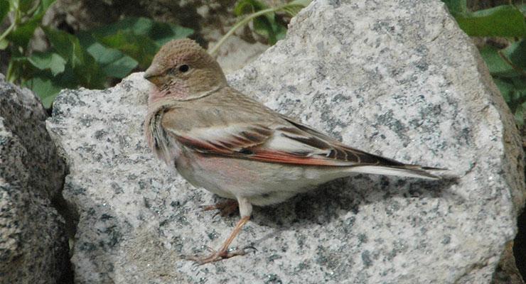 birding-tour-india