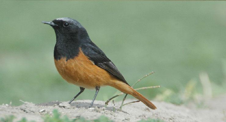 birding-india